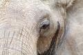 Картинка макро, природа, слоны