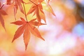 Картинка осень, природа, лист, дерево