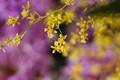 Картинка цветы, желтые, сиреневые