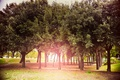 Картинка осень, солнце, деревья, парк, сияние, Sun, Autumn
