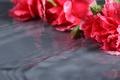 Картинка макро, цветы, отражение, лежат, гвоздики