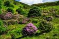 Картинка цветы, природа, холм, цветение, кустарники