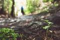 Картинка лес, листья, дерево, кора