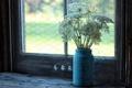 Картинка цветы, окно, фон