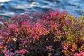 Картинка осень, листья, река, куст, поток