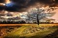 Картинка поле, дерево, утро