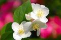 Картинка листья, цветы, дерево, весна, лепестки, сад