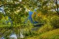 Картинка зелень, трава, солнце, деревья, ветки, Германия, речка