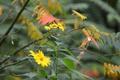 Картинка осень, листья, цветы, ветка, лепестки