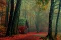 Картинка осень, лес, деревья, туман, путь, ветви, кабина