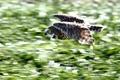 Картинка сова, птица, скорость, в полете