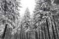 Картинка осень, снег, деревья