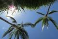 Картинка трава, небо, пальмы, солнце