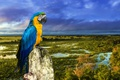 Картинка птица, ветка, попугай, Сине-жёлтый ара
