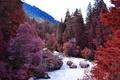 Картинка лес, деревья, пейзаж, горы, река