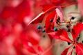 Картинка листья, природа, ягоды