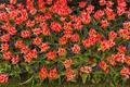 Картинка весна, лепестки, сад, тюльпаны, клумба