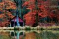 Картинка осень, лес, деревья, озеро, отражение, зеркало, кабина