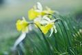 Картинка трава, макро, цветы, луг