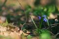 Картинка цветы, лепестки, синие, ветки
