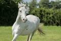 Картинка морда, конь, лошадь, бег, грива