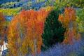 Картинка осень, деревья, горы, склон, Калифорния, США, Джун-Лайк
