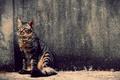 Картинка кот, стена, полосатый, animals, cat, pets