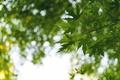 Картинка листья, дерево, ветка, зеленые