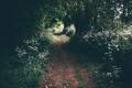 Картинка лес, цветы, растения, дорожка, тропинка