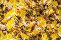 Картинка пчёлы, фон, улей
