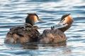 Картинка вода, птицы, природа