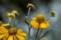 Картинка цветы, фон, природа