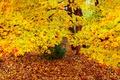 Картинка осень, лес, деревья, листва