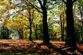 Картинка осень, лес, солнце, деревья, Польша, Brenna