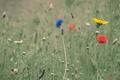 Картинка поле, трава, цветы, луг