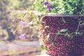 Картинка цветы, горшок, лепестки, листья, растение