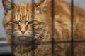 Картинка кот, взгляд, рыжий, котяра