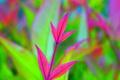 Картинка листья, растение, цвет, паутина, ветка