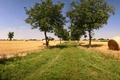 Картинка трава, деревья, поля, стог, сено, аллея