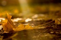 Картинка осень, макро, природа, лист