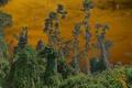 Картинка небо, деревья, тучи, летучие мыши