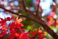 Картинка осень, листья, макро, дерево, багрянец