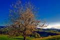 Картинка небо, трава, облака, горы, дерево, холмы