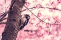 Картинка дерево, птица, весна