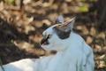 Картинка кошка, усы, взгляд, морда, фон