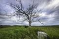 Картинка поле, пень, дерево