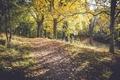 Картинка трава, листья, деревья, ветки, путь, солнечный свет