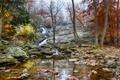 Картинка осень, лес, деревья, ручей, камни, скалы