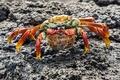 Картинка stones, crab, pose