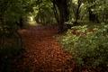 Картинка парк, осень, природа